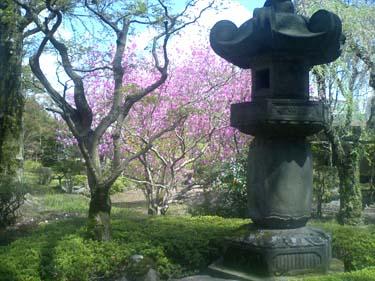 Kawashima_10